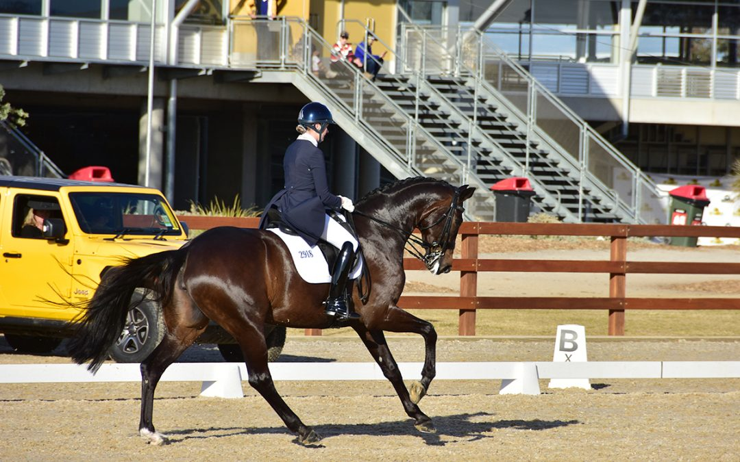 Maree Tomkinson-DMJ Donna Elena in the Grand Prix at 2019 NSW Dressage Championships